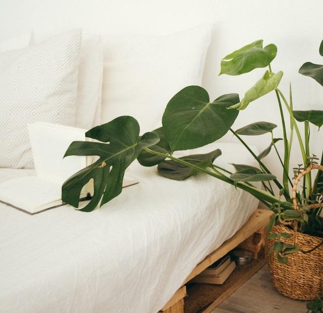 ベッドと観葉植物