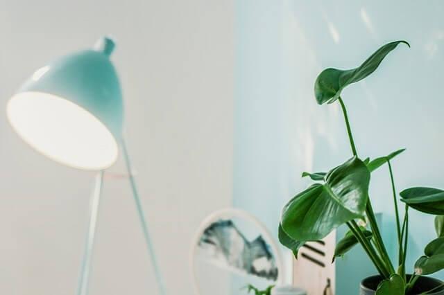 緑の照明器具と観葉植物